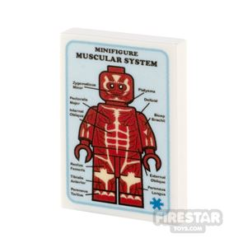 Custom Printed Tile 2x3 Medical Poster Muscular System